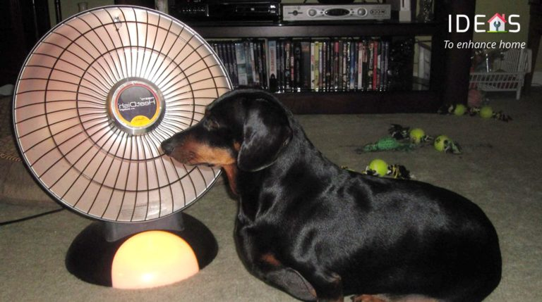 Why do dog love heater, this is an image with dog sitting very near to heater