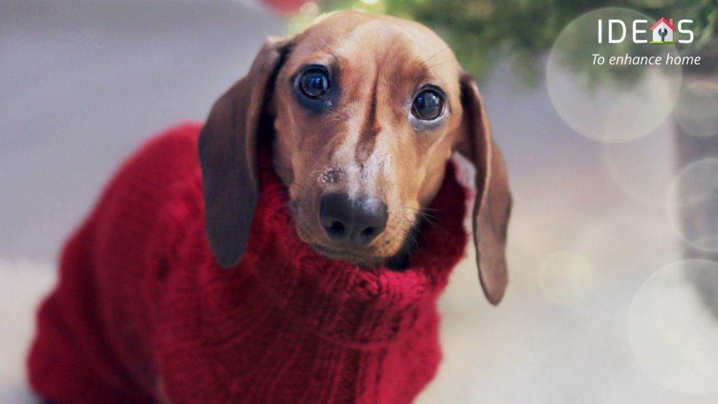 Image of dog dressed in winter